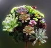 Succulant Bouquet