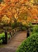 Autumn At The Gar...