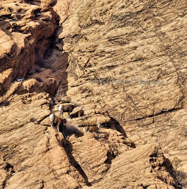 Colorado Climbers