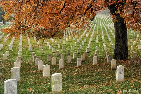 Arlington National Cemetery 3