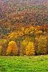 Autumn Grazing