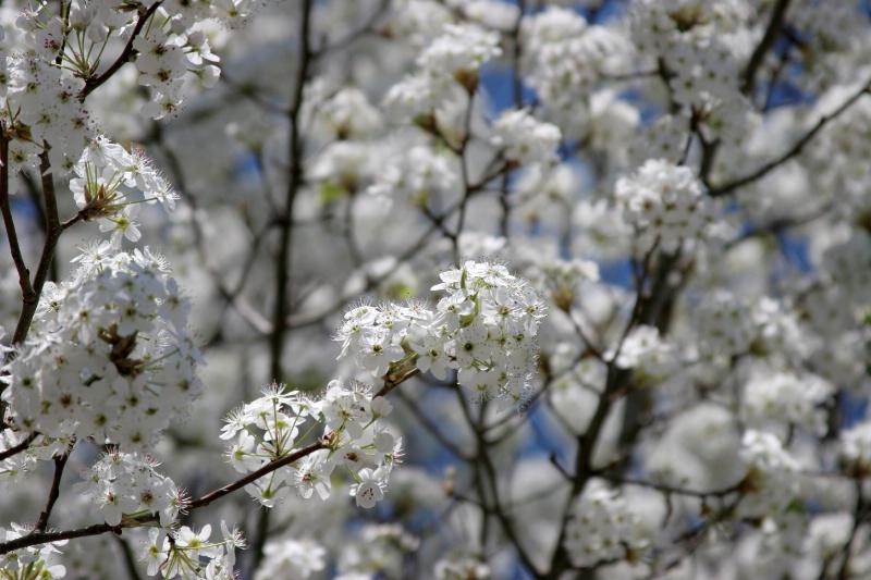 Spring in Winter - ID: 12641345 © William L. Nicks