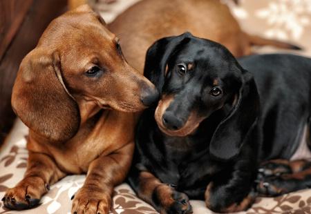 Rusty and Humphrey
