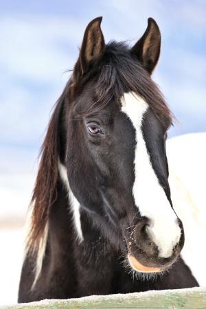 Winter Equine 4