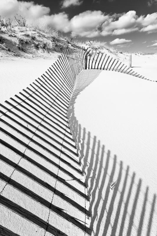 Zebra Fence