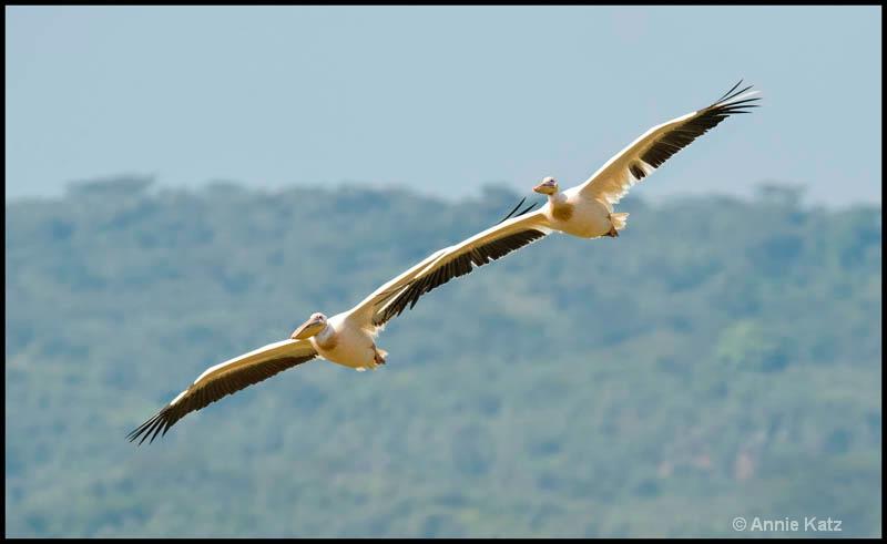 wing tips - ID: 12656247 © Annie Katz