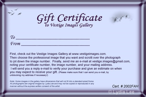 Gift Certificate - ID: 12660879 © Lydia Lee