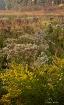 Bog Wildflowers 1