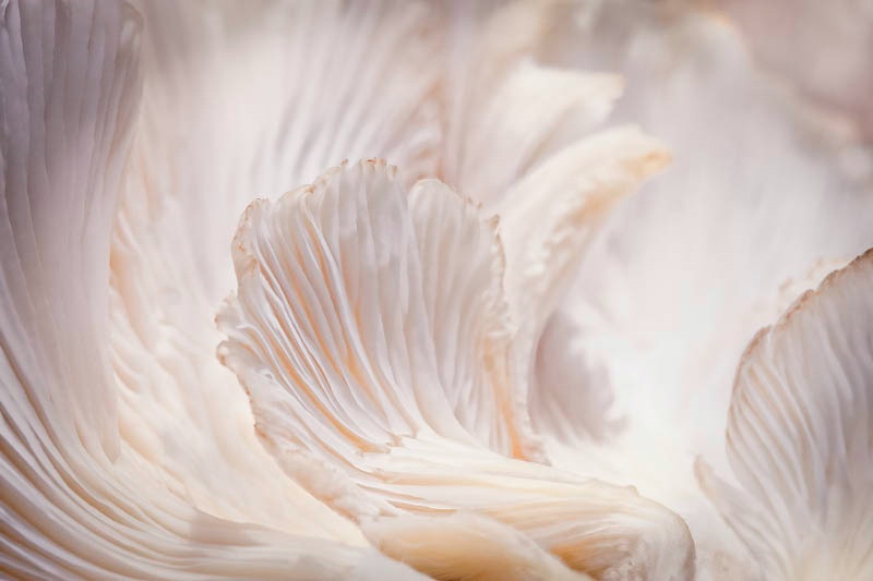 Marvelling the Mushroom - Into the Heart - ID: 12661542 © Marilyn Cornwell