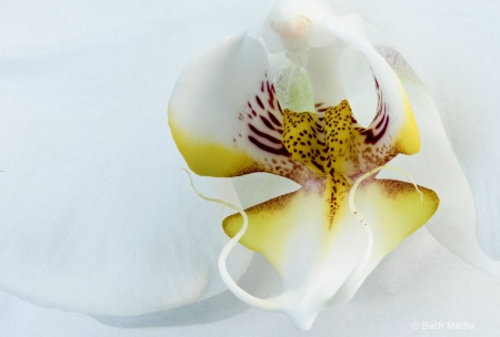 Orchid Detailed