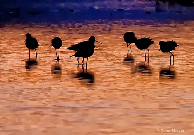 Sunset Birds - ID: 12683072 © Dene Shaver