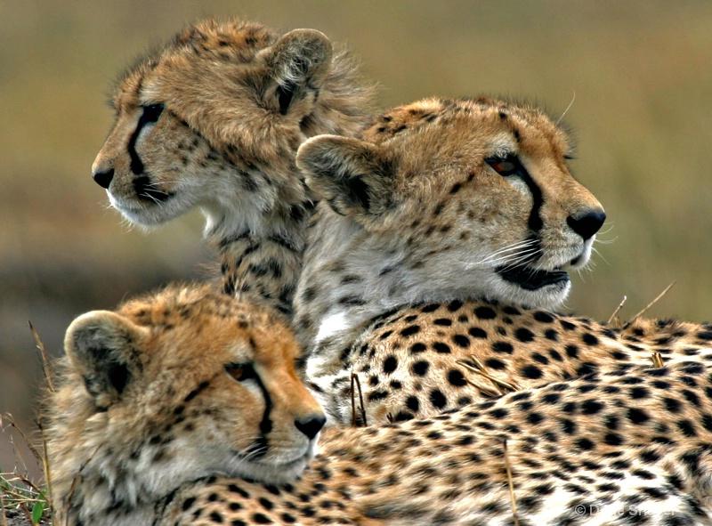 The Family - ID: 12683073 © Dene Shaver