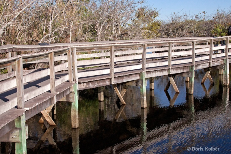 Anhinga Trail Boardwalk - ID: 12686085 © Cliff Kolber