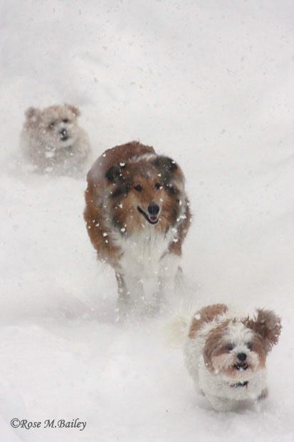 We Love Snow Days!