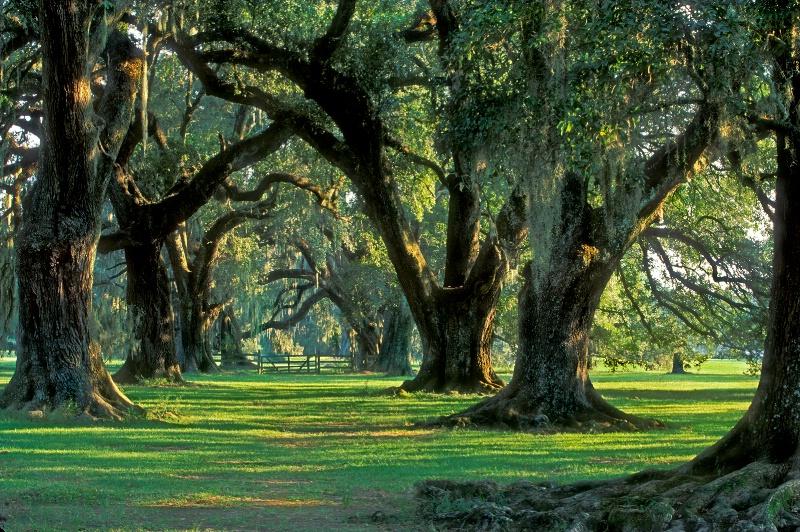 Grand Coteau, Louisiana - ID: 12695156 © Kenneth A. Wilson