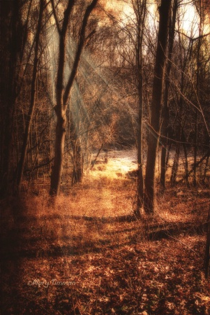 The Lighted Path
