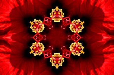 Williamsburg Flower--Kaleidoscope
