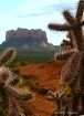 Cactus Compositio...