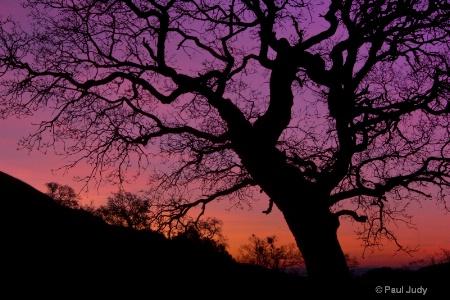Sunrise on Mount Hamilton