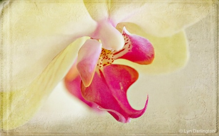 Elegant Orchid.