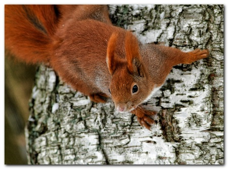 Today's squirrel