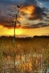 Dawn in the Everg...