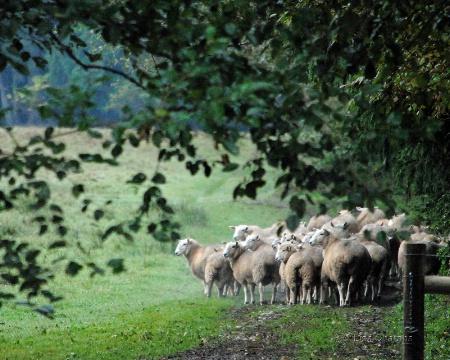 Heading to Greener Pasture