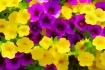 Floral Meld