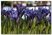 Spring flowers :0...