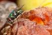 Fruit-Loving Fly