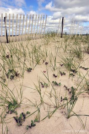 spring beach grass