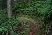Trail of Ferns