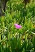 Moroccon Grass & ...