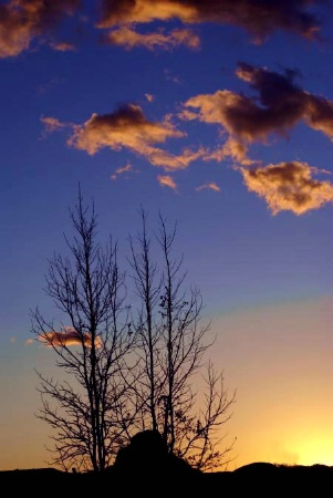 Twigs at sunset