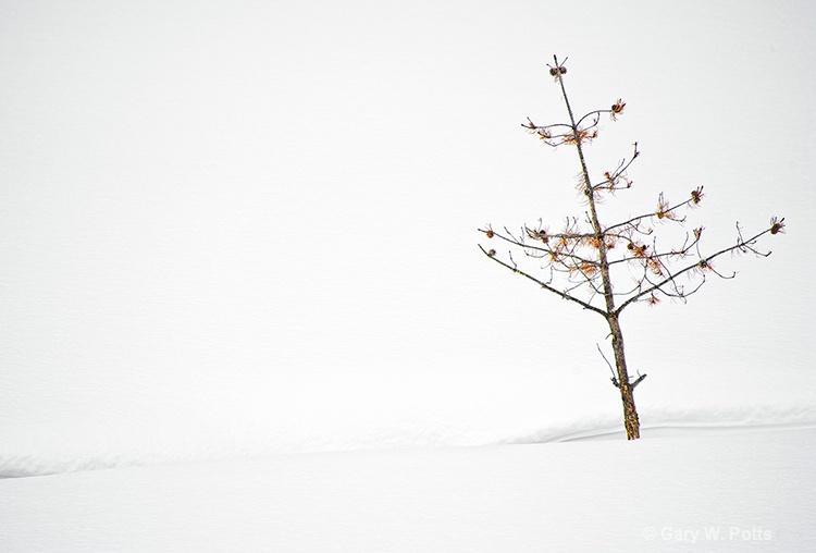 Ravaged By Winter - ID: 12762916 © Gary W. Potts