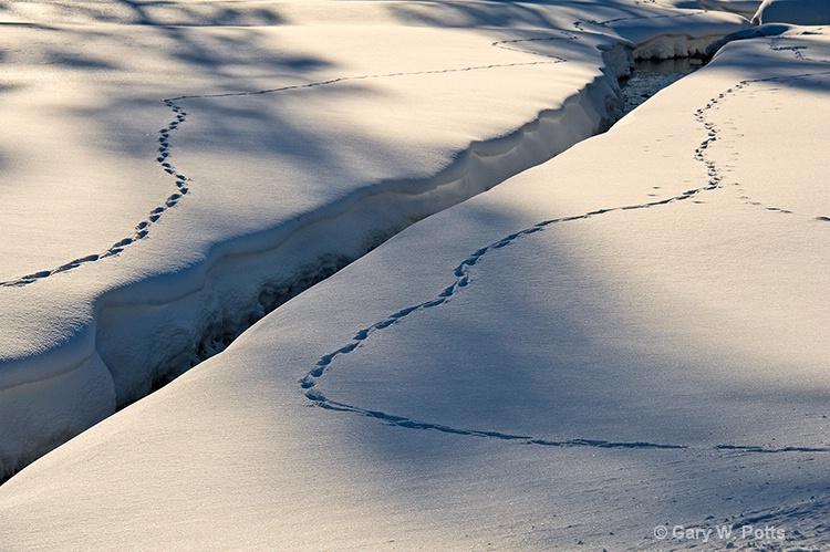 Tracks #2 - ID: 12762925 © Gary W. Potts