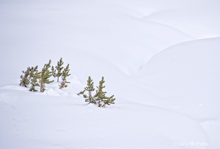 Winter's Simplicity - ID: 12762931 © Gary W. Potts