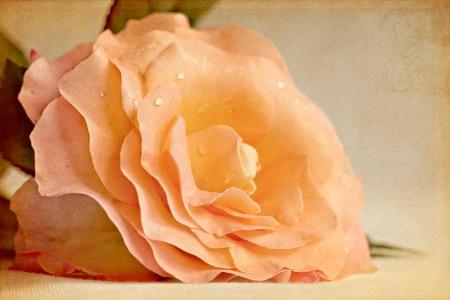 Vintage Rose.