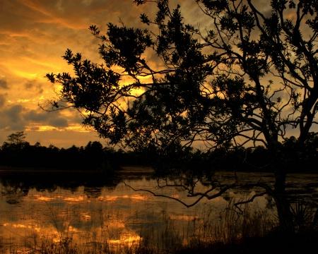 Swamp Tree Sunset