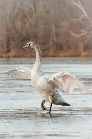 Kung Fu Goose