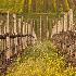 © Pat Powers PhotoID # 12787029: Napa Vineyards