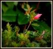 Bloomin' Spri...