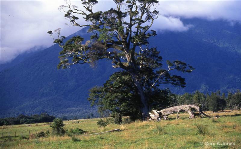 Tree down Fat Cat Road - ID: 12790708 © Gary A Jones