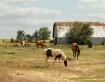 Four Horses & A B...