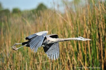 Heron Moves