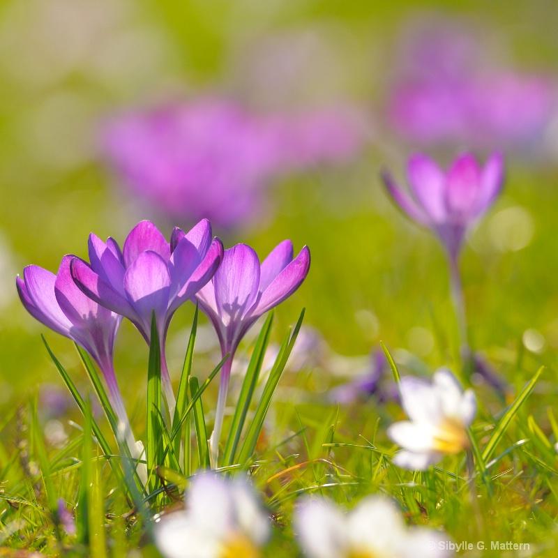 spring - ID: 12794836 © Sibylle G. Mattern
