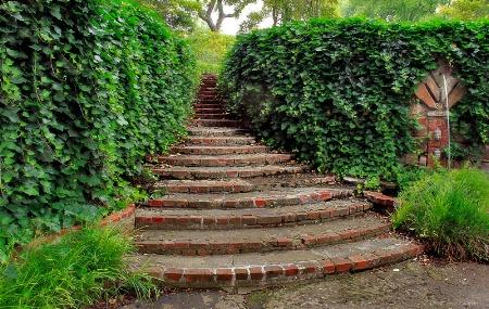 Green Garden Envy