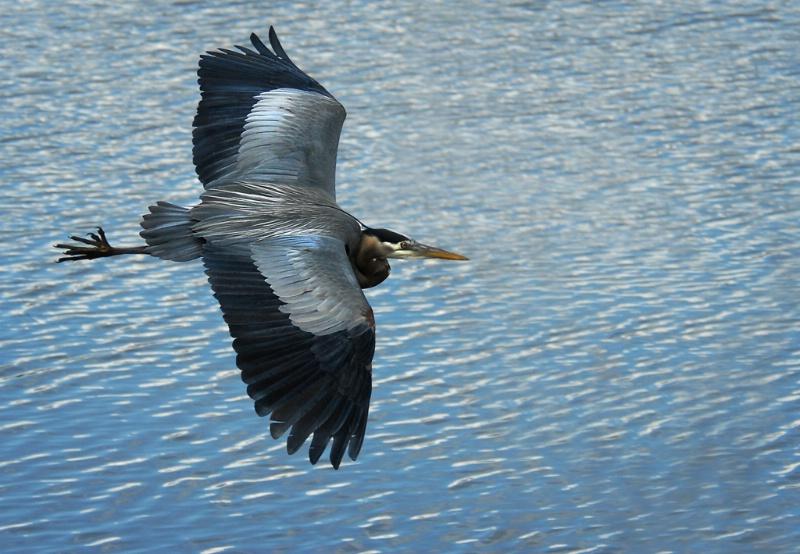 In Flight - ID: 12798650 © Kelly Pape