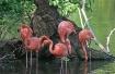 """ Flamingos &..."