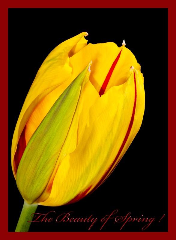 w2012 3 abgardens 0007 beauty of spring - ID: 12805102 © Nina Shields
